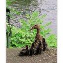 09_Duck Alarm